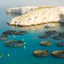 Nutrition in Aquaculture